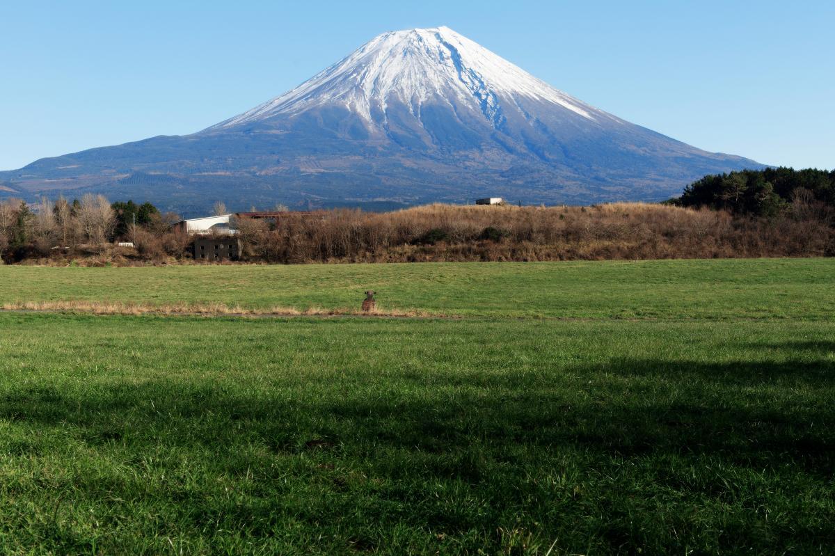 牧草地と富士山 牧草地の後ろに富士山がそびえています