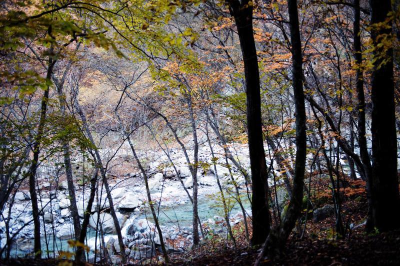 [ 川沿いの爽やかな道 ]  林の中から見える川が綺麗です