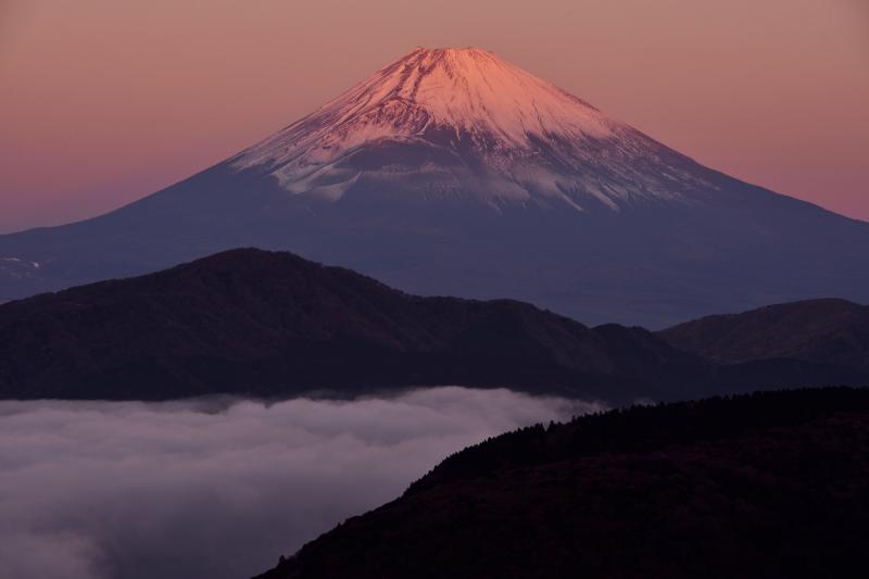 [ 大観山からの紅富士 ]  紅富士と雲海