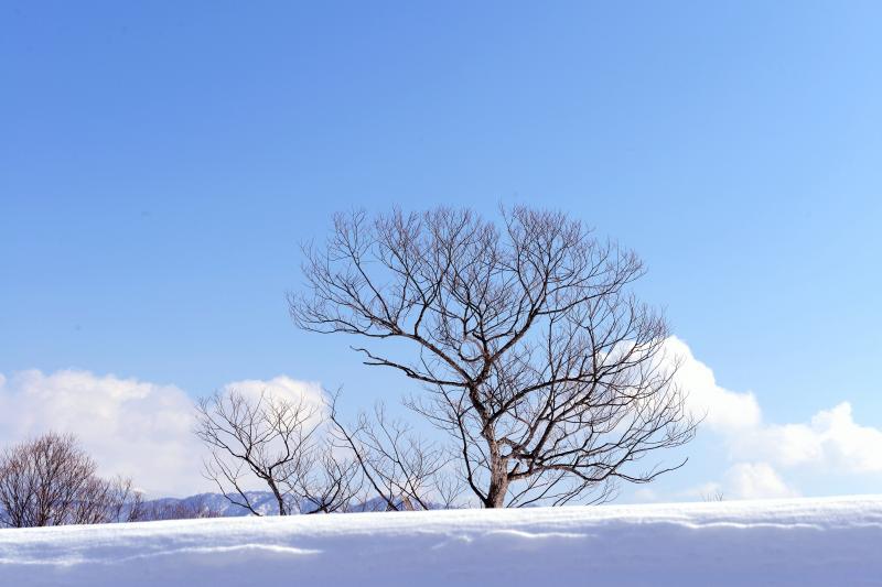 [ 雪原の木 ]  道路わきにあった木