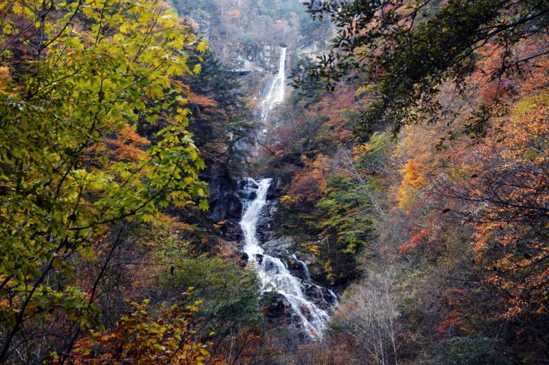 [ 紅葉の北精進ヶ滝 ]  目の前に現れた滝は巨大でした