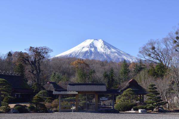 八海庭園 彦兵衛屋敷と富士山 | 大きな日本庭園があります