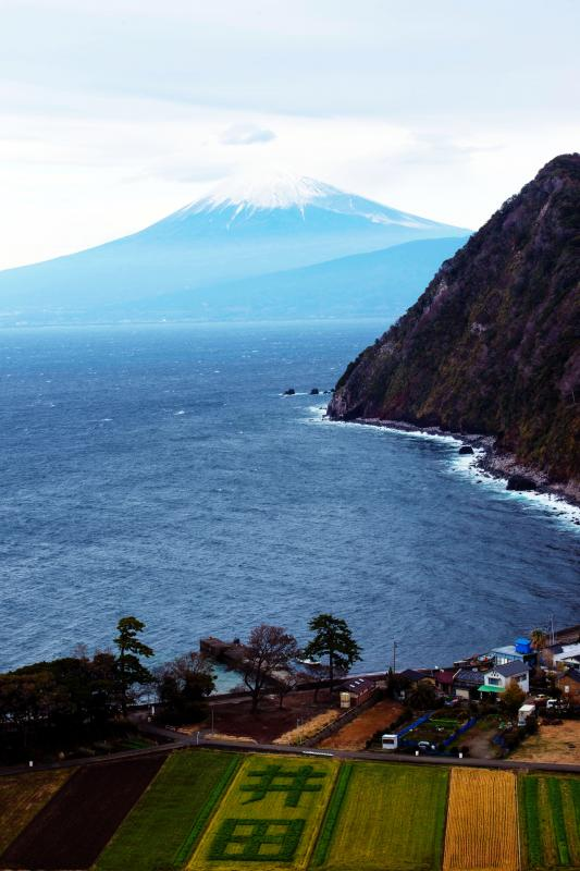 [ 西伊豆の井田からみた富士山 ]  畑に井田の文字が