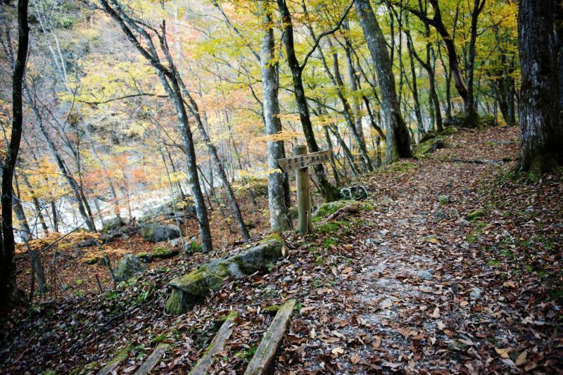 [ 北精進ヶ滝へ向かう道 ]  紅葉の道は気持ちいい