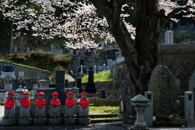 [ 龍穏院の桜 No1 ]  お地蔵さんと桜