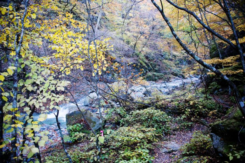 [ 紅葉の渓流沿い ]  三の滝から上は渓流沿いを歩きます