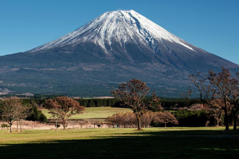 ふもとっぱらみた富士山 | ふもとっぱらの広場の木が印象的