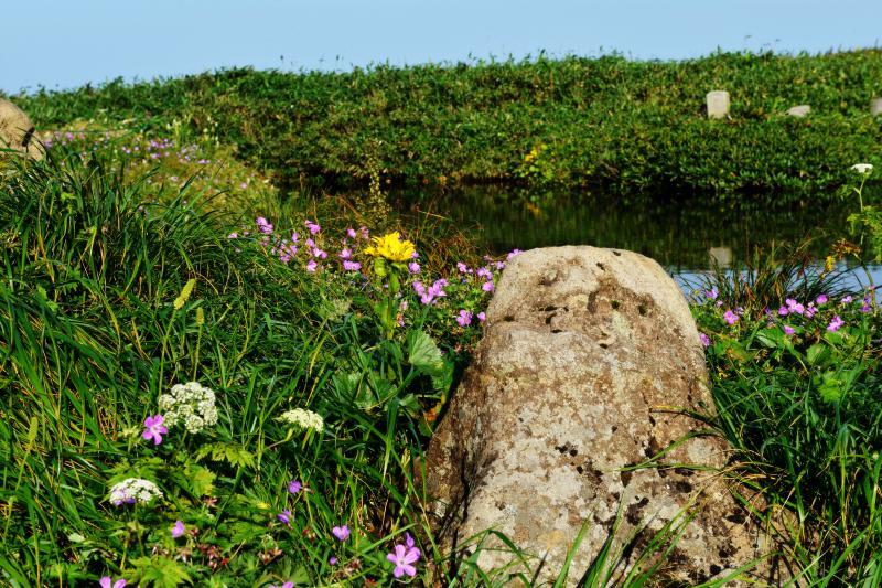 [ 佛生池小屋前の池 ]  池の周辺にはたくさんの高山植物が咲いています