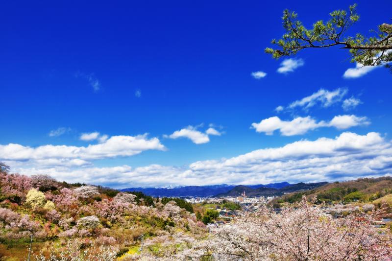 [ 花見山からの展望 ]  花見山の中腹から見た福島市街地です。