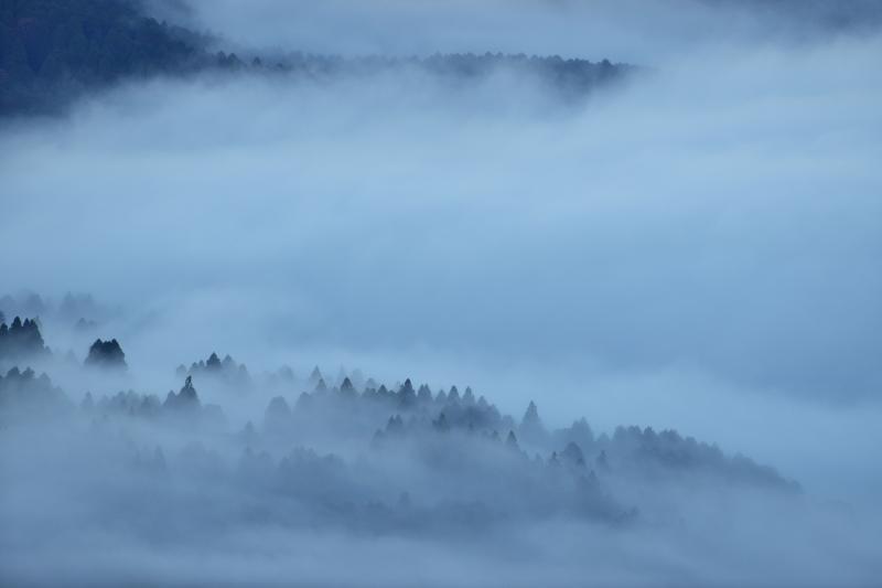 [ 水墨画の世界 ]  芦ノ湖の雲海に浮かぶ林