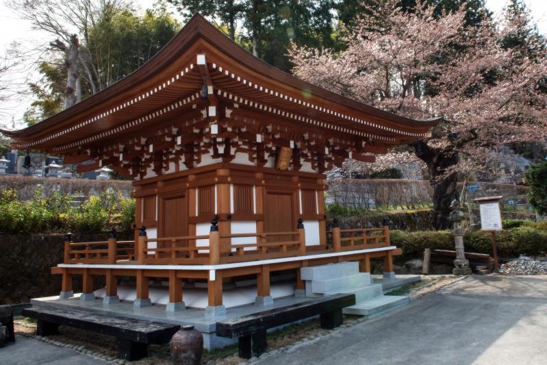 [ 法蔵寺の桜 ]  本堂左側に桜があります