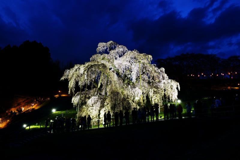 滝桜を囲んで | 滝桜は人気者