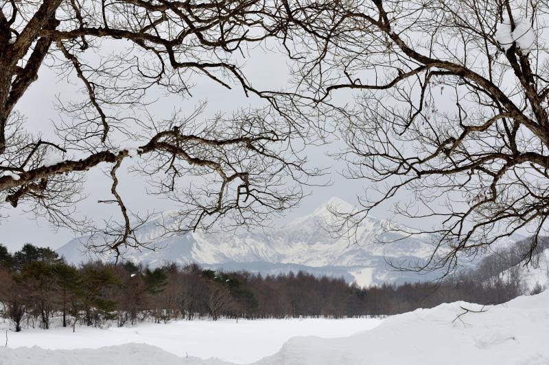 [ 冬の桧原湖 ]  木の枝越しに磐梯山が見えます