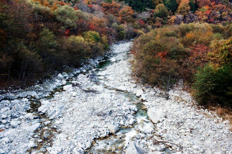 [ 白い石の河原 ]  この川は白っぽい石が特徴的です