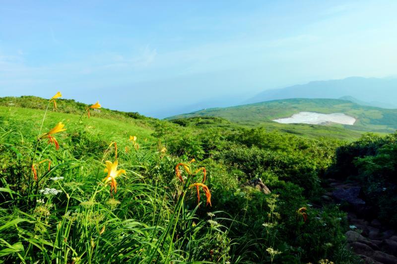 [ 登山道のニッコウキスゲ ]  登山道の横にニッコウキスゲが咲いています