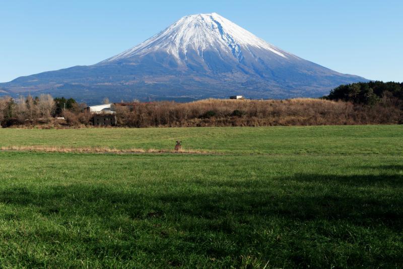 牧草地と富士山 | 牧草地の後ろに富士山がそびえています