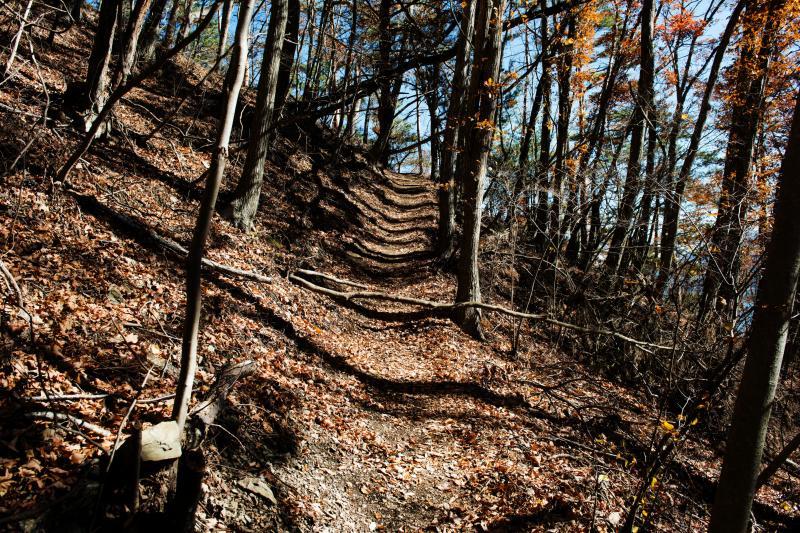 [ パノラマ台への道(登山道) ]  登り応えのある道です