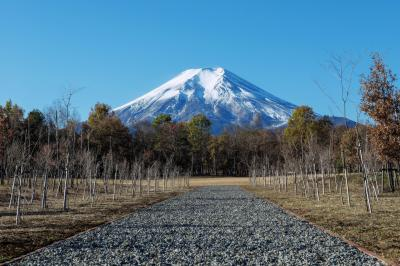 富士山へ続く道| 砂利の道が富士山へと向かっています