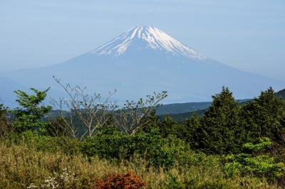 [ 十国峠からの富士山遠望 ]  新緑と雄大な富士