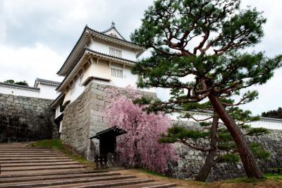 二本松城の桜| 門の外に小さなシダレザクラがあります