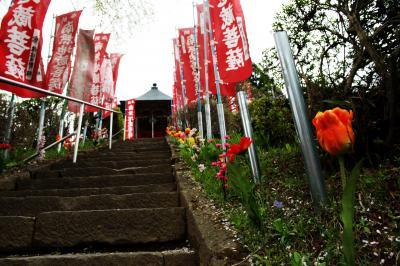 龍光寺の桜|