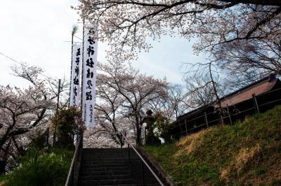 王子神社の桜とのぼり| 境内に桜とのぼりが見えます