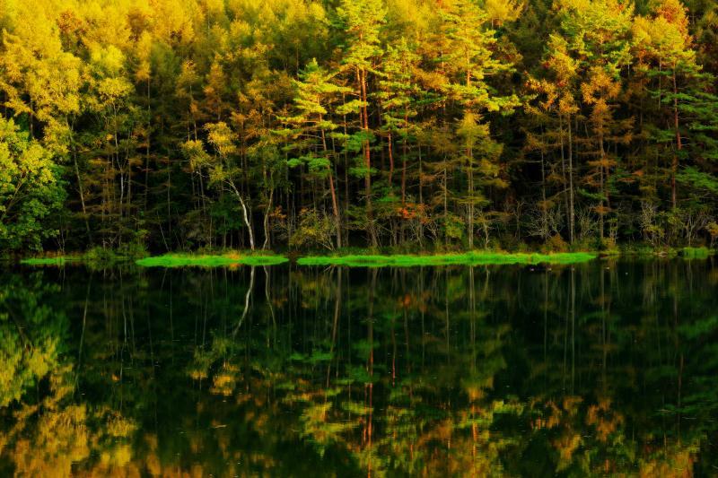 [ 夕日に輝く御射鹿池 ]  対岸の島を囲むカラマツに夕日が当たり、黄金色に輝いていました。