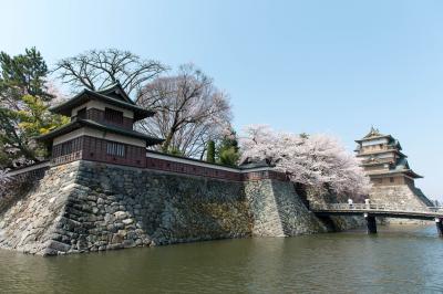 [ 諏訪の浮城 ]  石垣から流れ落ちる桜