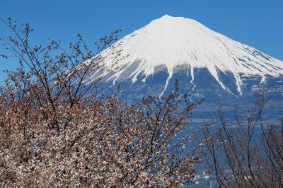 [ 岩本山公園からの富士山 ]  大きな富士山が見えました。