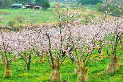 丹霞郷の春| のどかな風景が広がります。