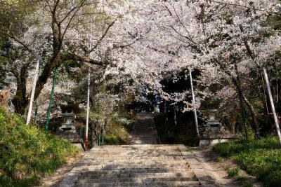 飯沼石段桜| 桜のトンネルと階段