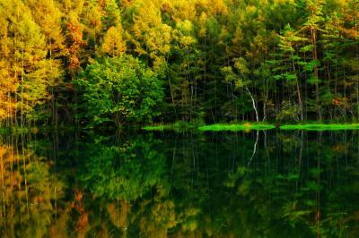 秋色  夕暮れ時、斜光に輝く木々が美しい御射鹿池。鏡のような水面に映り込む木々。