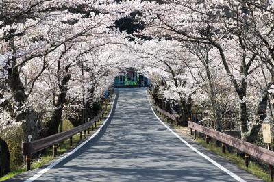 天竜川を渡る| 坂戸橋の桜トンネルは春の名物。