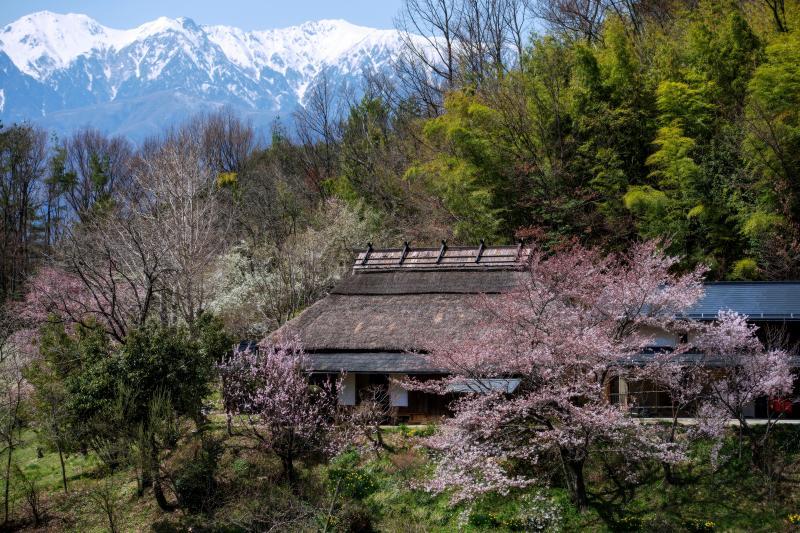 [ 中川村の春風景 ]  茅葺と桜と残雪の中央アルプス。絵になりますね。