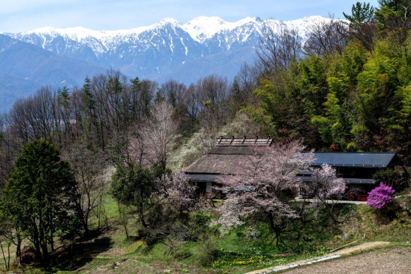 谷村家の桜| 中川村にある日本の原風景。