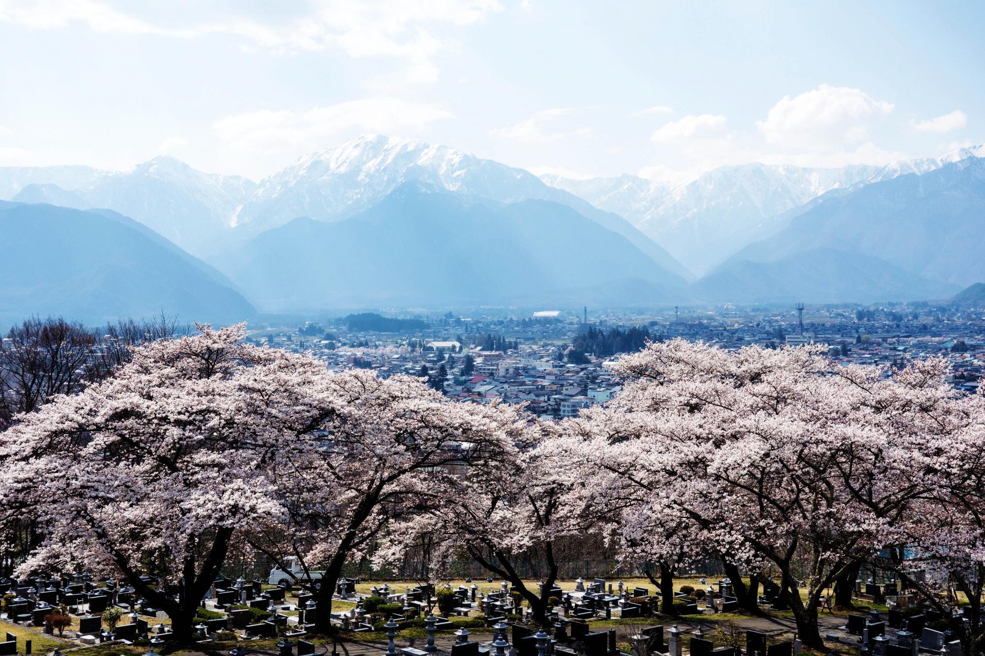大町市霊園の桜 | ピクスポット (絶景・風景写真・撮影スポット ...
