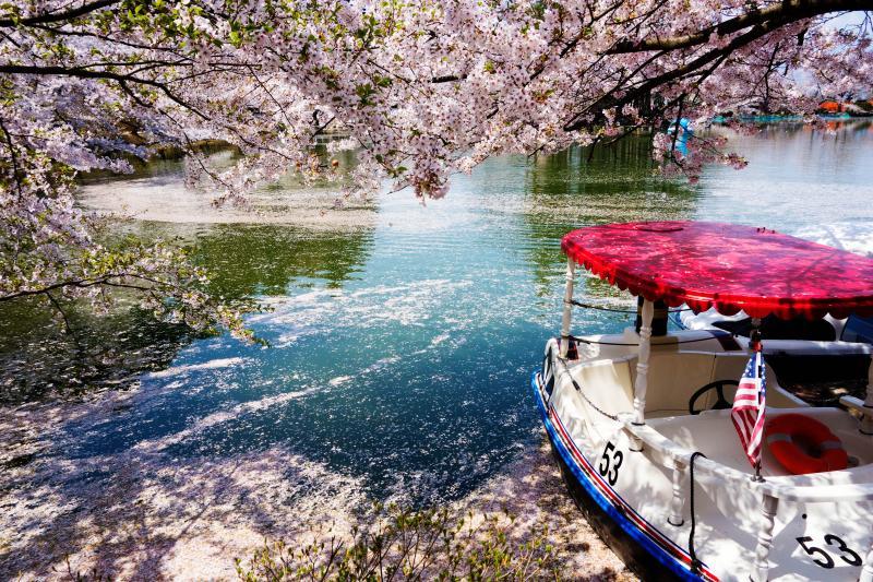 [ 花いかだを揺らして ]  桜の中でのボート遊びは楽しそうです。