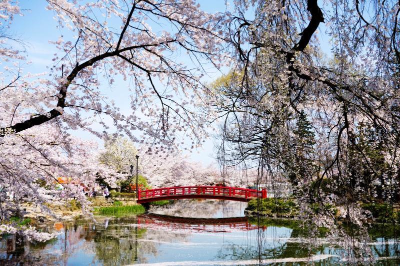 [ 水面に映る弁天橋 ]  竜ヶ池の中に浮かぶ弁天島へ架かる赤い橋。この場所は人気撮影ポイントのひとつ。