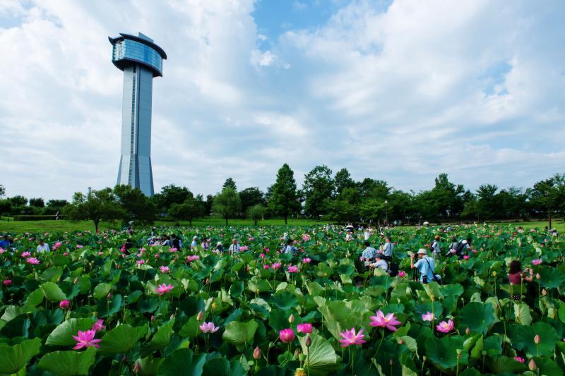 古代蓮の里のシンボルタワー| 蓮の池の中には遊歩道があり、蓮を近くで見ることができます。