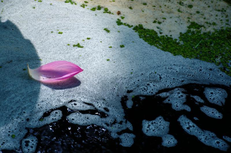 [ 光の中に ]  水の泡に当たった光が美しい。