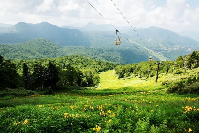 東館山のニッコウキスゲとゴンドラ | ゲレンデは黄色いニッコウキスゲの絨毯になっています。