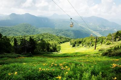 東館山のニッコウキスゲとゴンドラ| ゲレンデは黄色いニッコウキスゲの絨毯になっています。