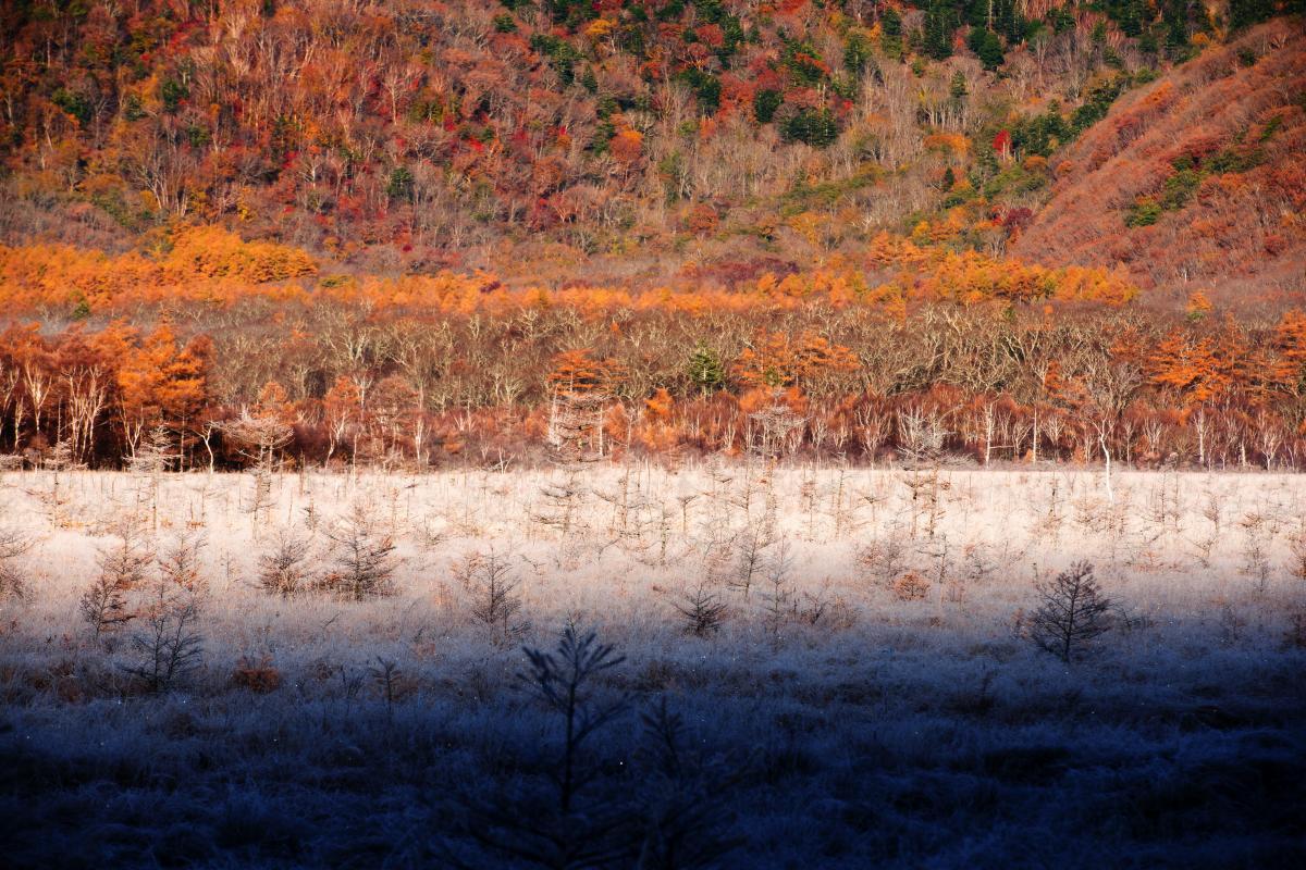 夢の世界 霧氷に覆われた草原とカラマツの紅葉。解け出した氷がキラキラ光る美しさ。夜明け時15分ほどの間、この風景を味わうことができました。