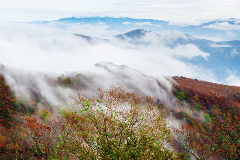 [ 雲湧き立つ霧降の紅葉 ]  斜面からモクモクと雲が湧いてきます。