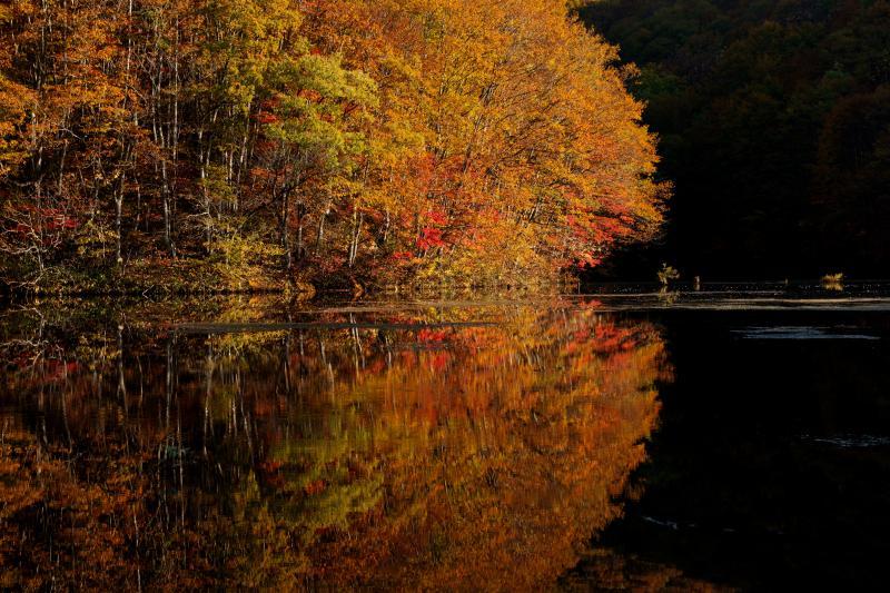 朝日に浮かぶ紅葉 | 秋元湖の朝焼け、曽原湖の朝霧を撮影後に曲沢沼を回りました。 少し待っていると紅葉に朝陽が当たり、色鮮やかな風景が目の前に広がりました。