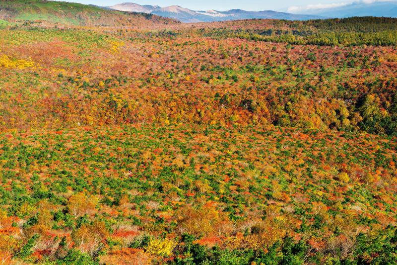 [ 安達太良山の紅葉と吾妻小富士 ]  安達太良山の斜面は紅葉の絨毯