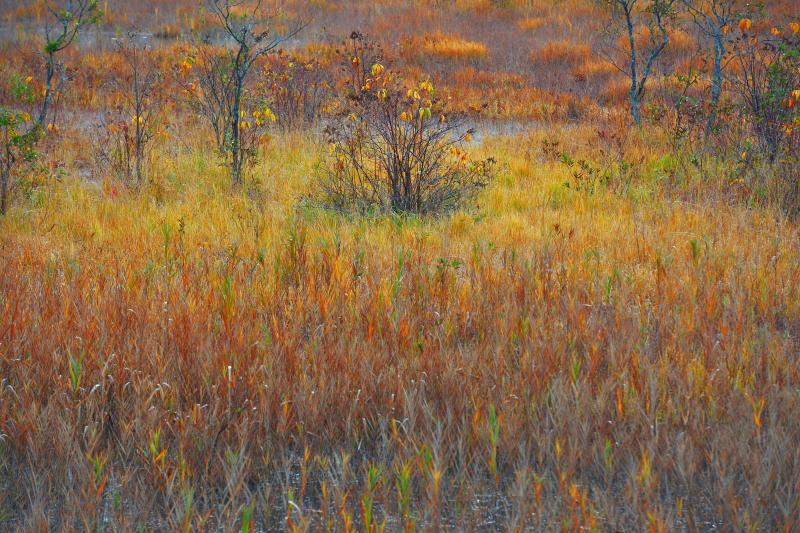 [ 観音沼森林公園・草紅葉 ]  秋の深まりを感じる瞬間
