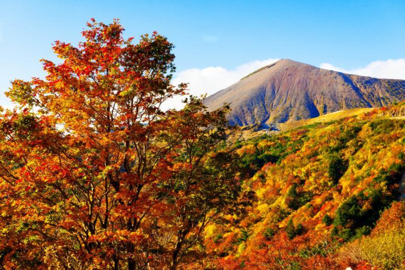 紅葉のスカイラインをドライブ | 赤く染まった木々が美しい
