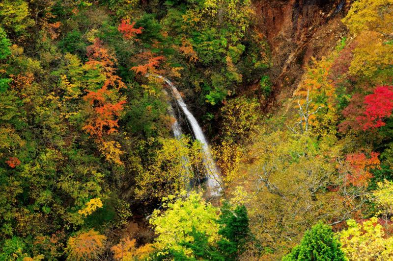 [ 紅葉の不動沢滝 ]  落差15mほどの美滝。橋の上から俯瞰できる滝で、谷を埋め尽くす紅葉の中 白い布のような流れが綺麗。