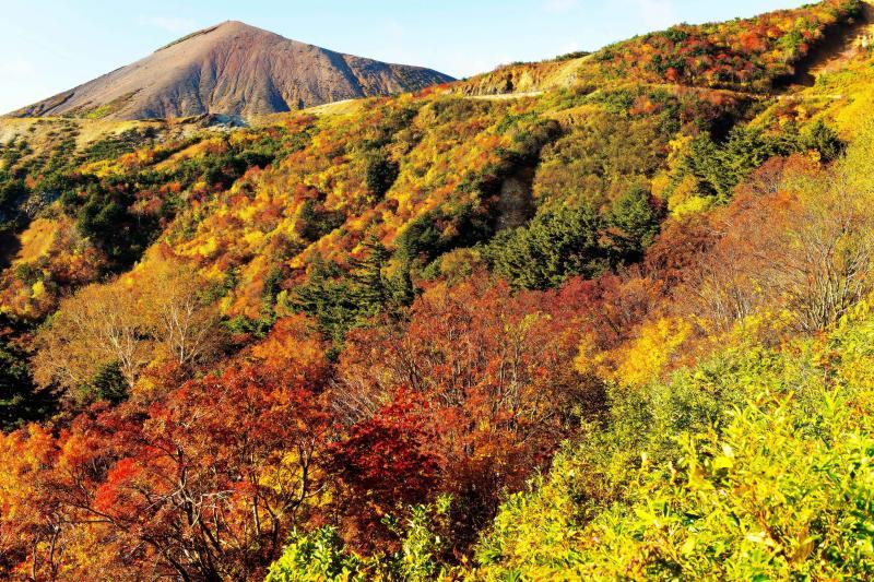 [ 紅葉燃えるスカイラインと吾妻富士 ]  紅葉の斜面の中をスカイラインが横切っています。